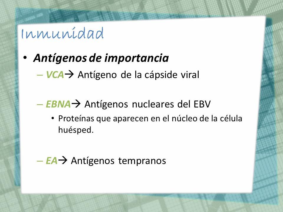 Inmunidad Antígenos de importancia VCA Antígeno de la cápside viral