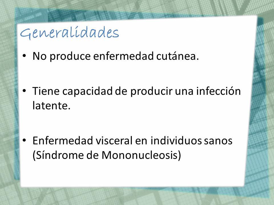 Generalidades No produce enfermedad cutánea.
