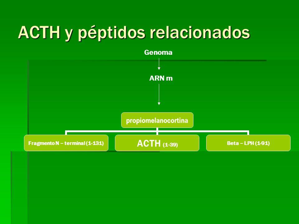 ACTH y péptidos relacionados
