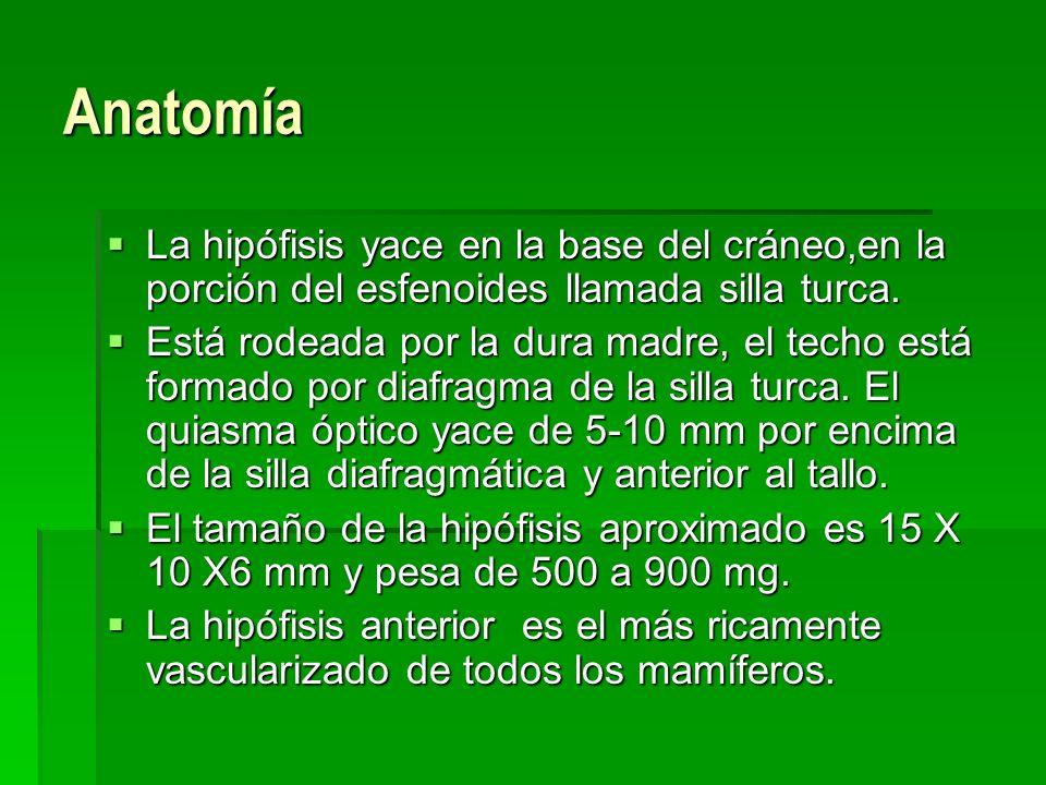 AnatomíaLa hipófisis yace en la base del cráneo,en la porción del esfenoides llamada silla turca.