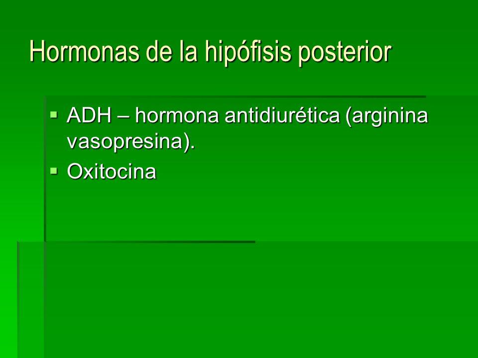 Hormonas de la hipófisis posterior