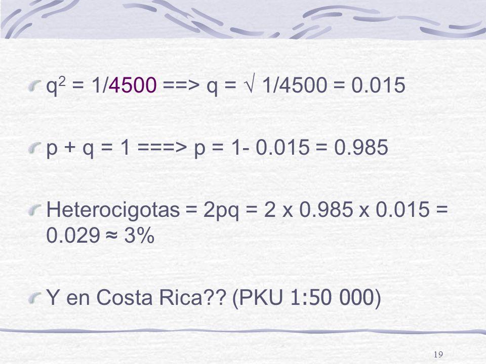 q2 = 1/4500 ==> q = √ 1/4500 = 0.015 p + q = 1 ===> p = 1- 0.015 = 0.985. Heterocigotas = 2pq = 2 x 0.985 x 0.015 = 0.029 ≈ 3%