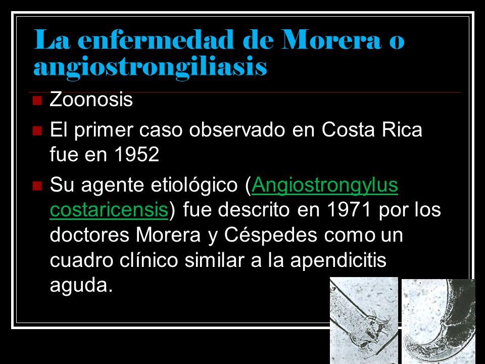 La enfermedad de Morera o angiostrongiliasis