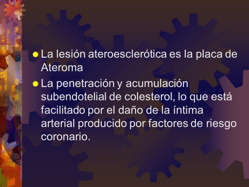La lesión ateroesclerótica es la placa de Ateroma