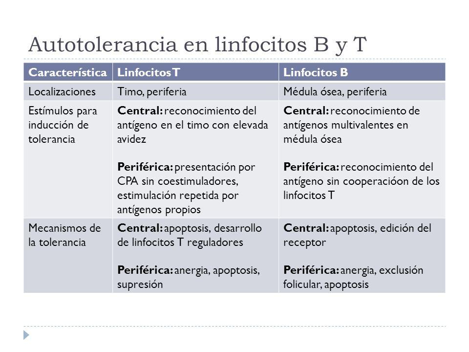 Autotolerancia en linfocitos B y T
