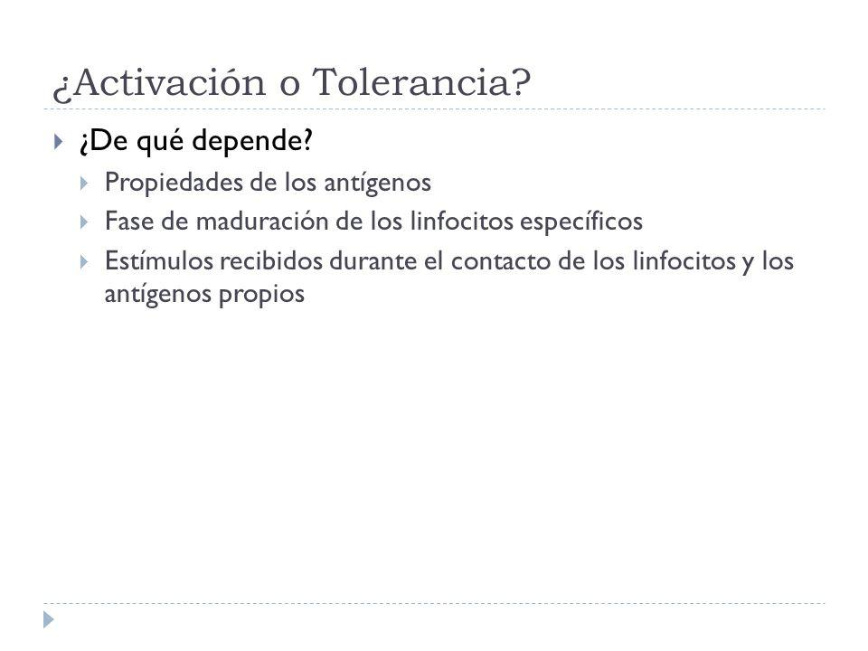 ¿Activación o Tolerancia