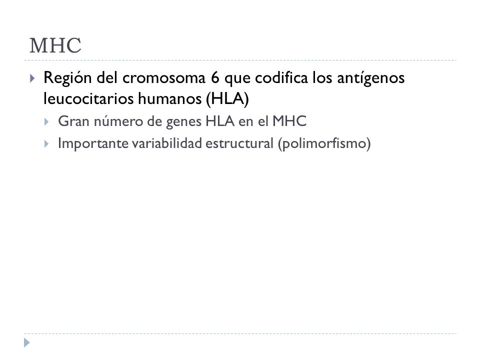 MHC Región del cromosoma 6 que codifica los antígenos leucocitarios humanos (HLA) Gran número de genes HLA en el MHC.