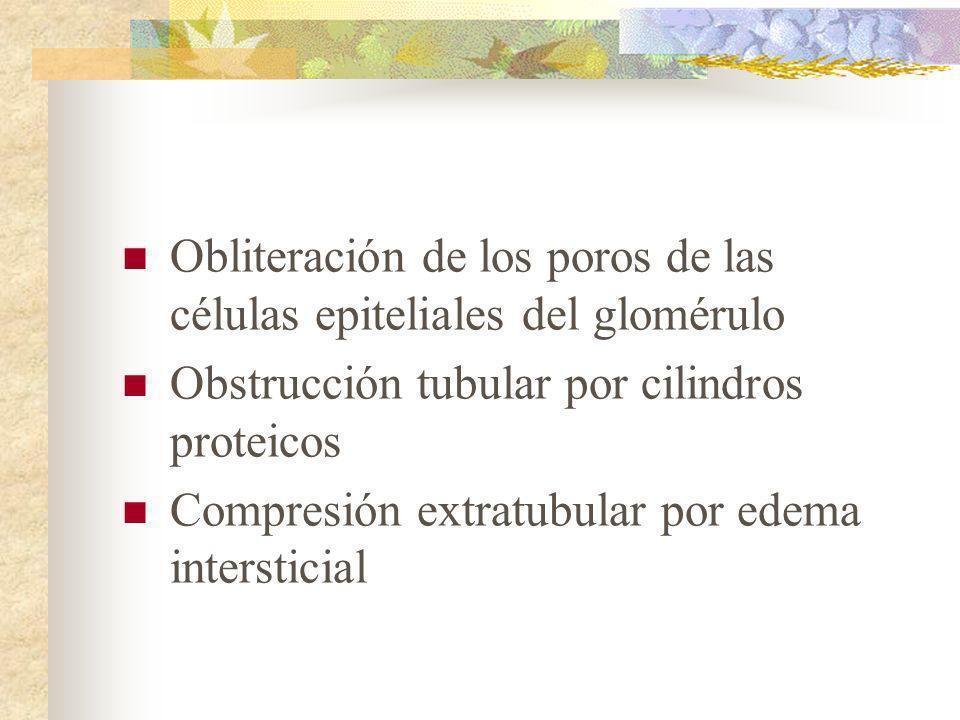 Obliteración de los poros de las células epiteliales del glomérulo