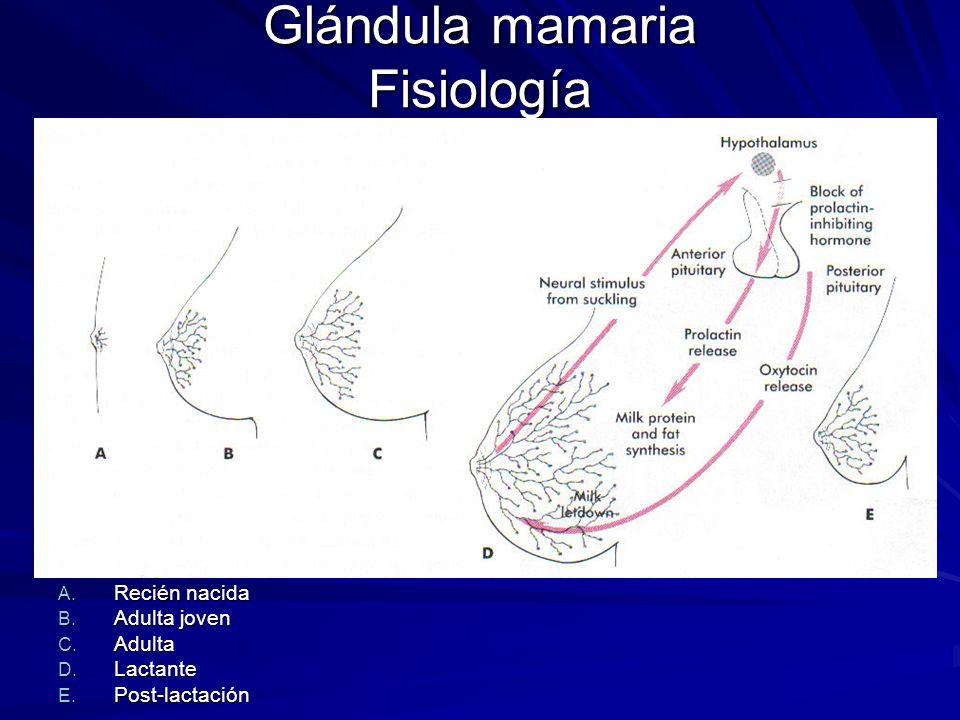Glándula mamaria Fisiología
