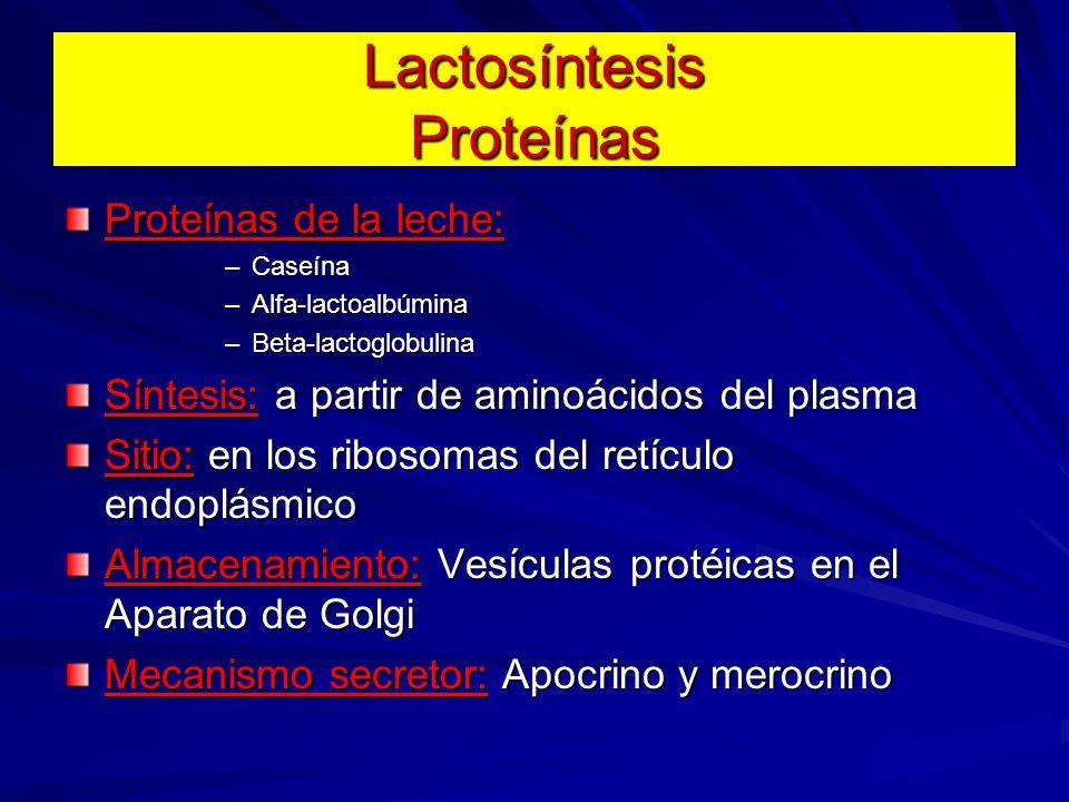 Lactosíntesis Proteínas