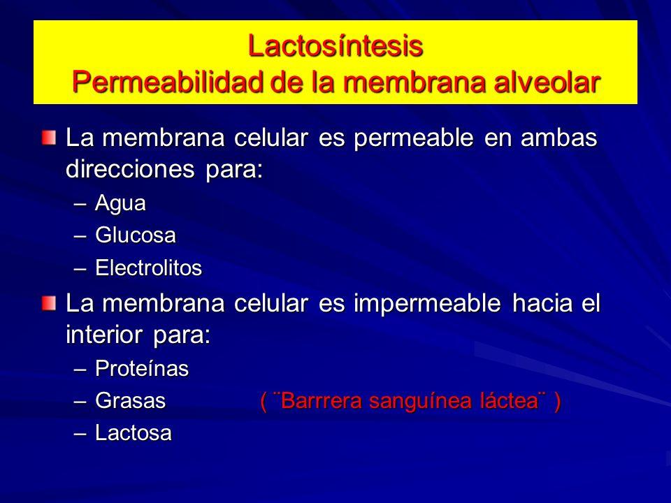 Lactosíntesis Permeabilidad de la membrana alveolar