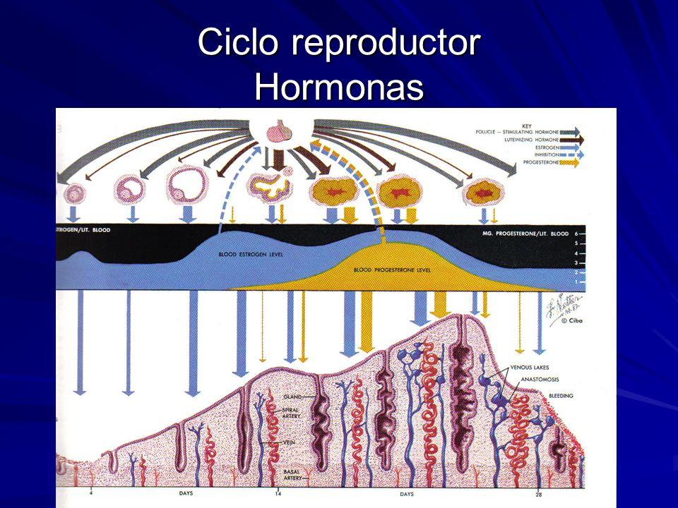 Ciclo reproductor Hormonas
