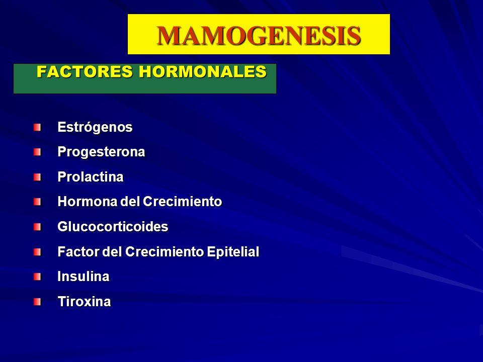 MAMOGENESIS FACTORES HORMONALES Estrógenos Progesterona Prolactina