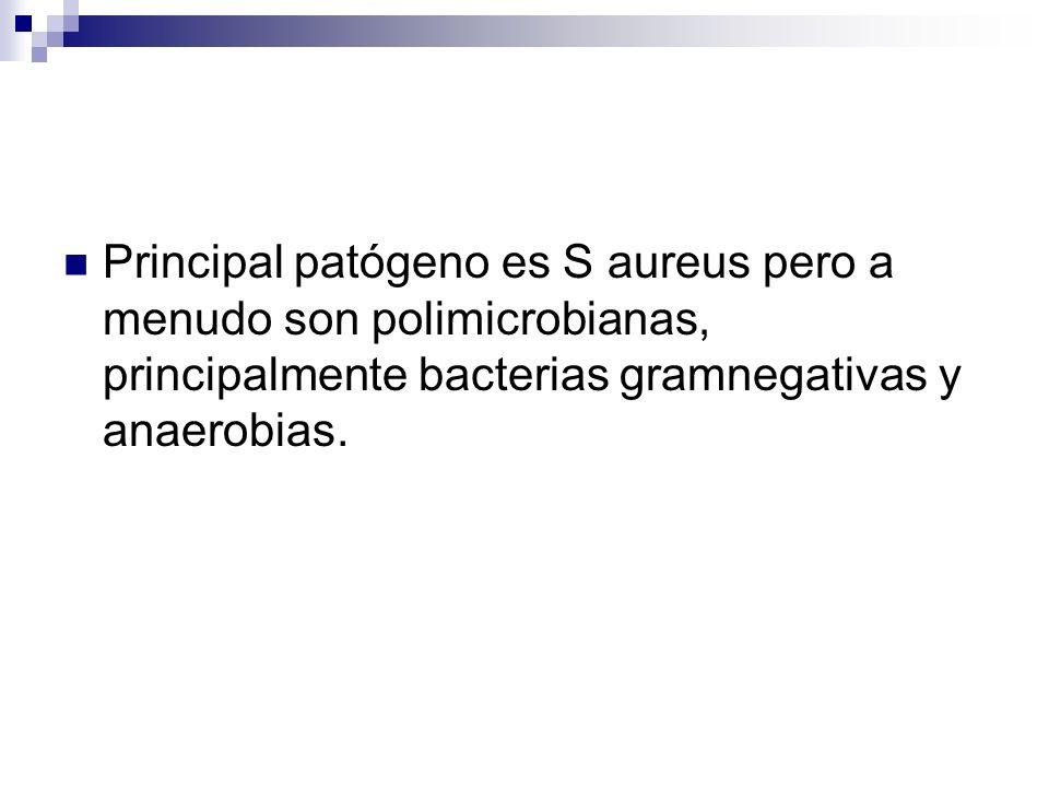 Principal patógeno es S aureus pero a menudo son polimicrobianas, principalmente bacterias gramnegativas y anaerobias.