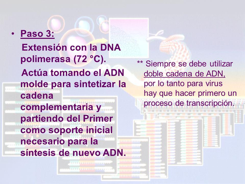 Extensión con la DNA polimerasa (72 °C).