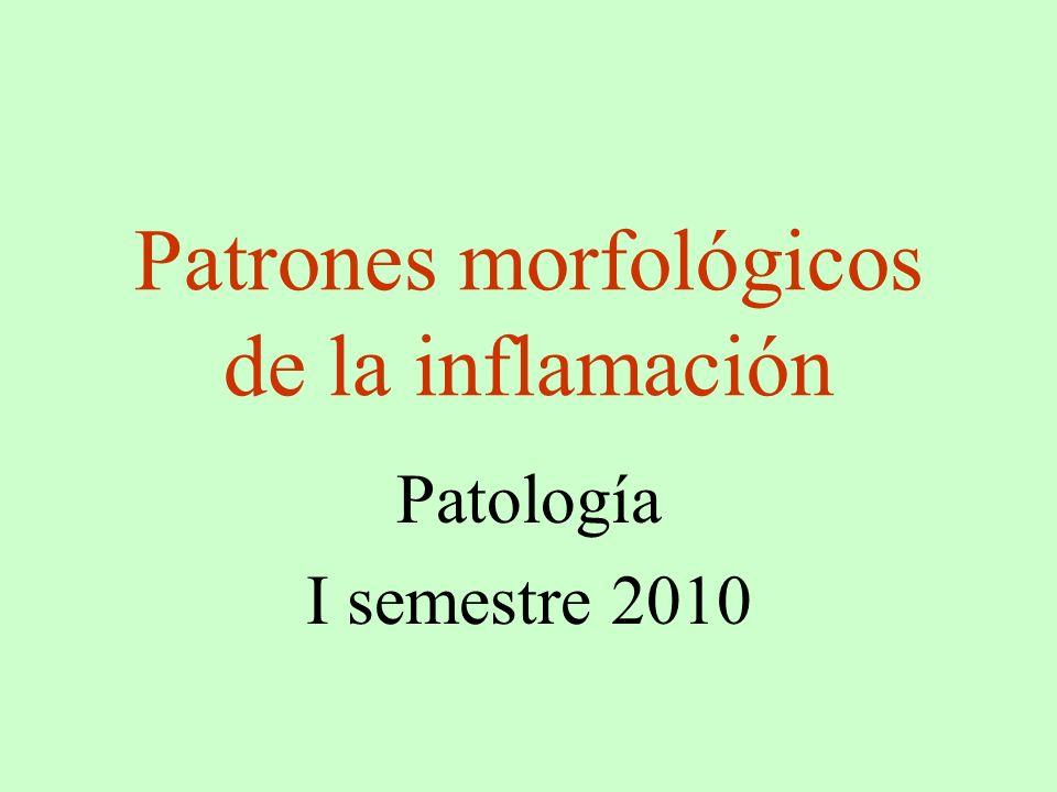 Patrones morfológicos de la inflamación