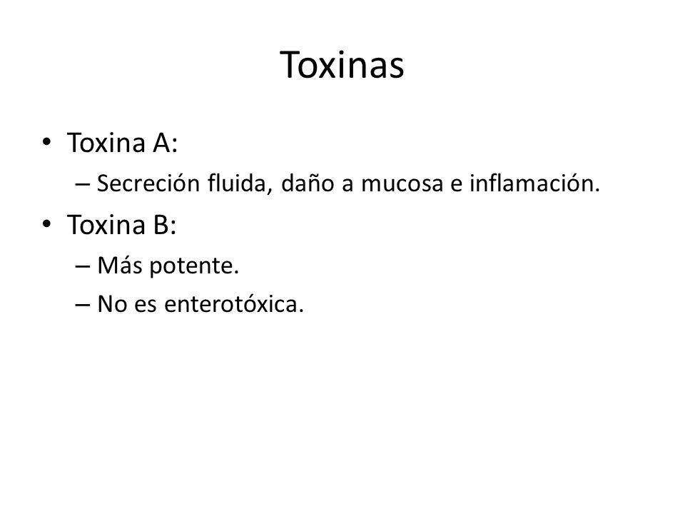 Toxinas Toxina A: Toxina B: