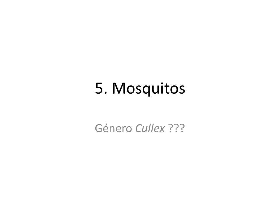 5. Mosquitos Género Cullex