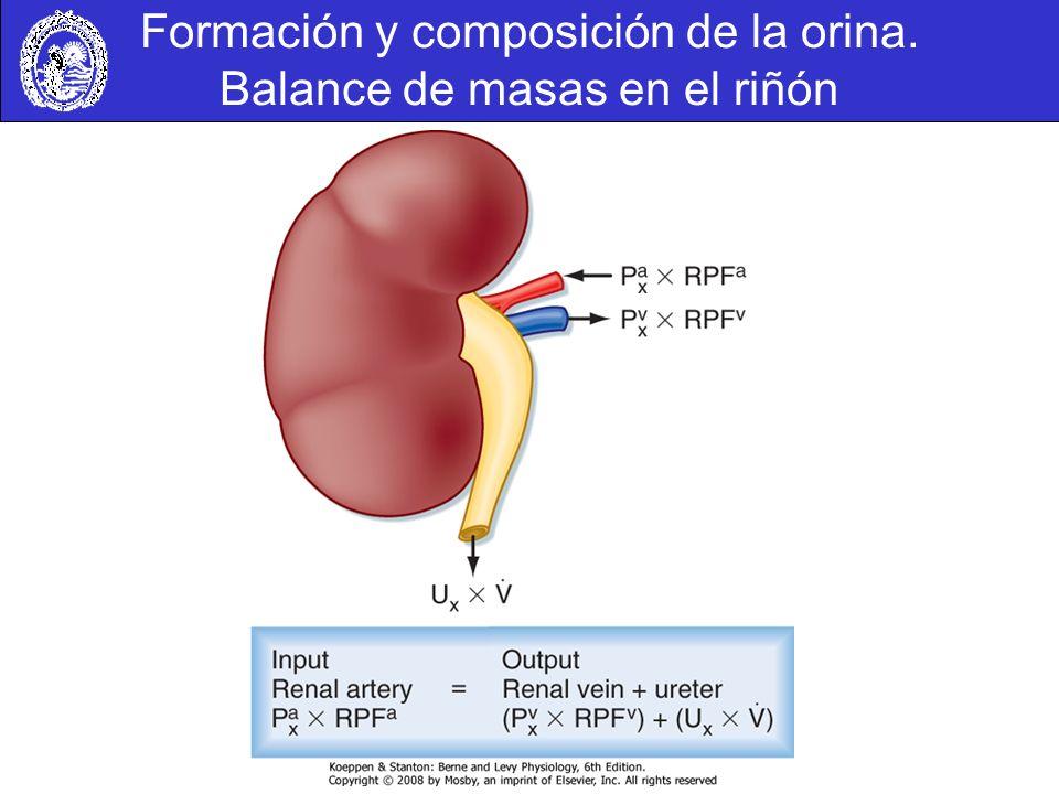 Formación y composición de la orina. Balance de masas en el riñón