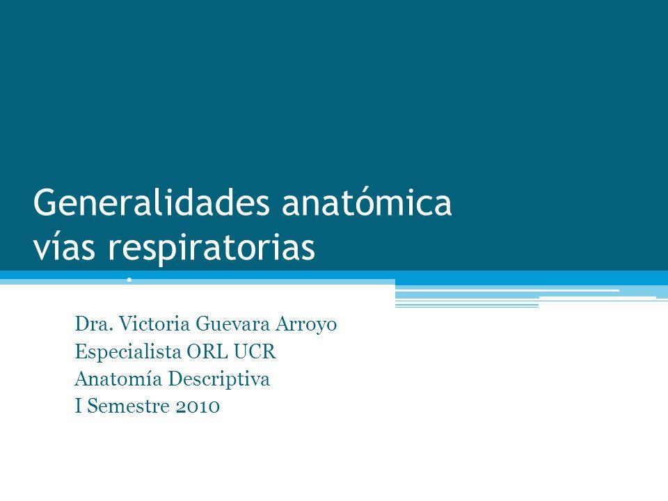 Generalidades anatómica vías respiratorias superiores