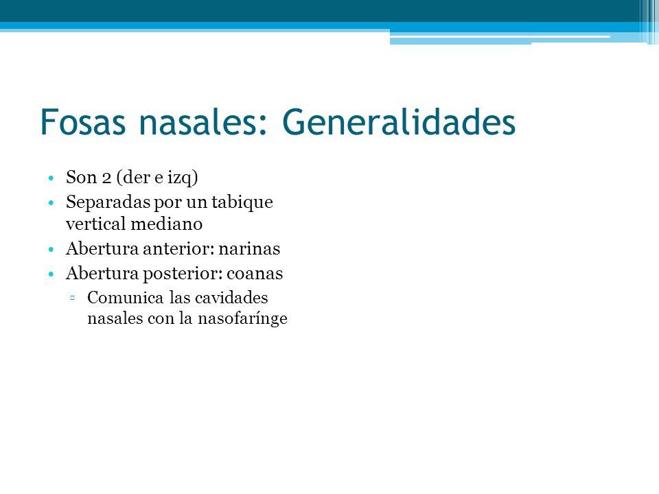 Fosas nasales: Generalidades