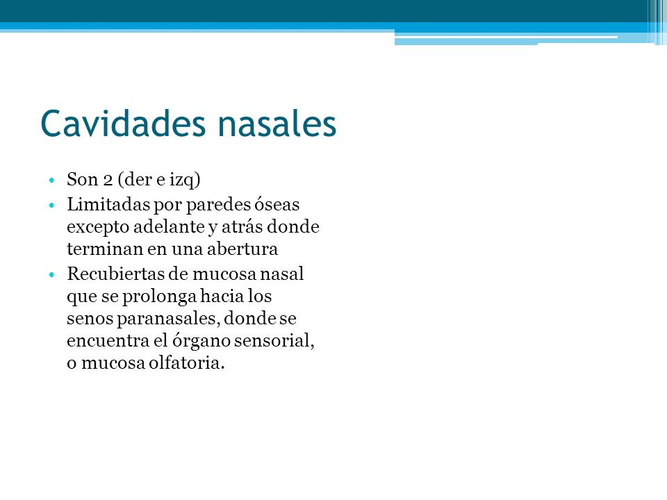 Cavidades nasales Son 2 (der e izq)