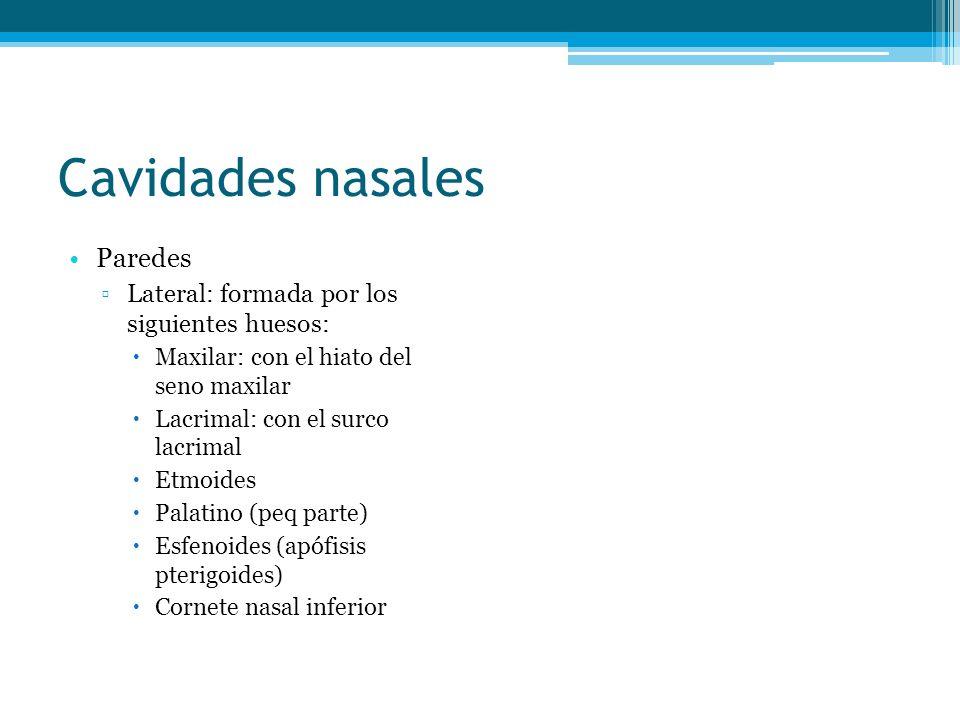 Cavidades nasales Paredes Lateral: formada por los siguientes huesos: