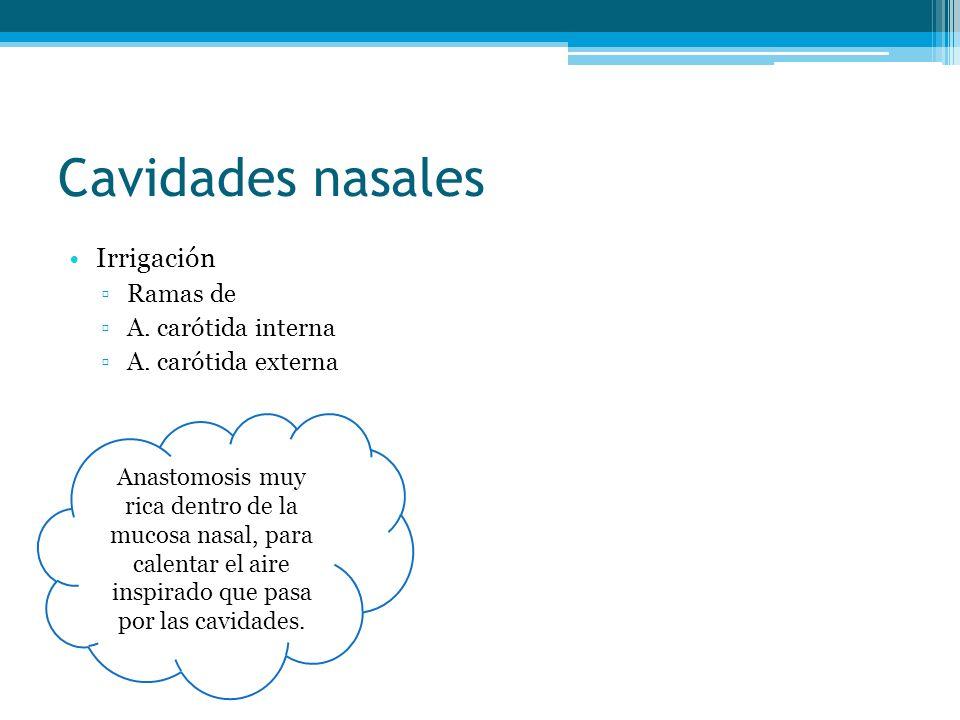 Cavidades nasales Irrigación Ramas de A. carótida interna
