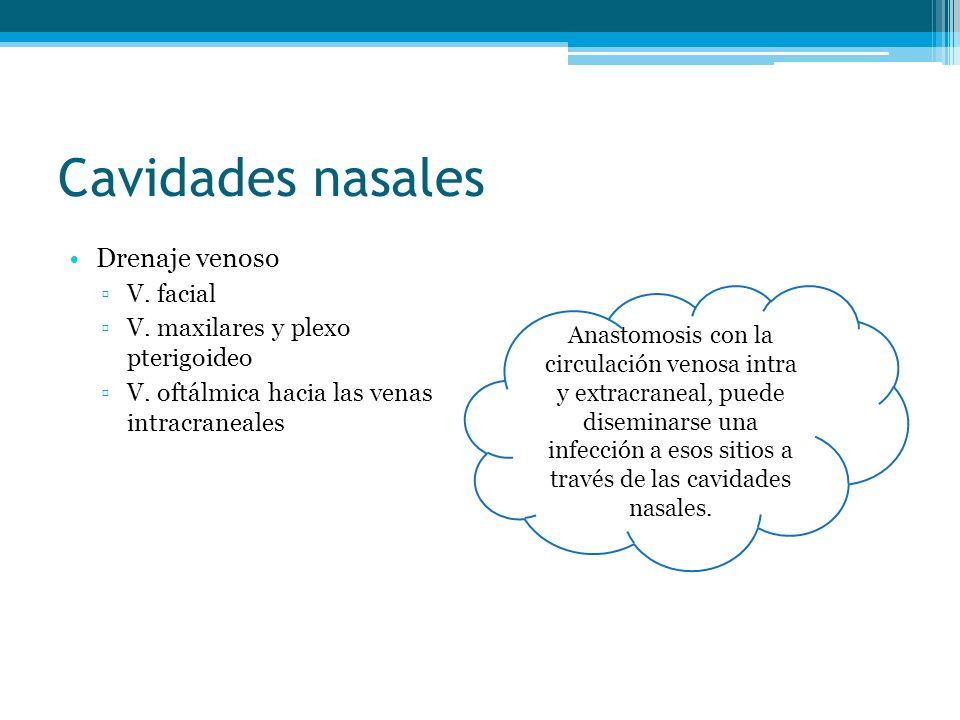 Cavidades nasales Drenaje venoso V. facial