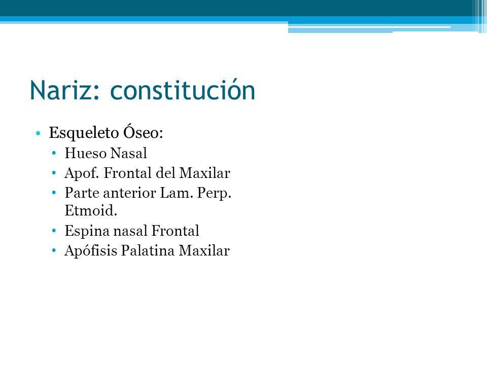 Nariz: constitución Esqueleto Óseo: Hueso Nasal