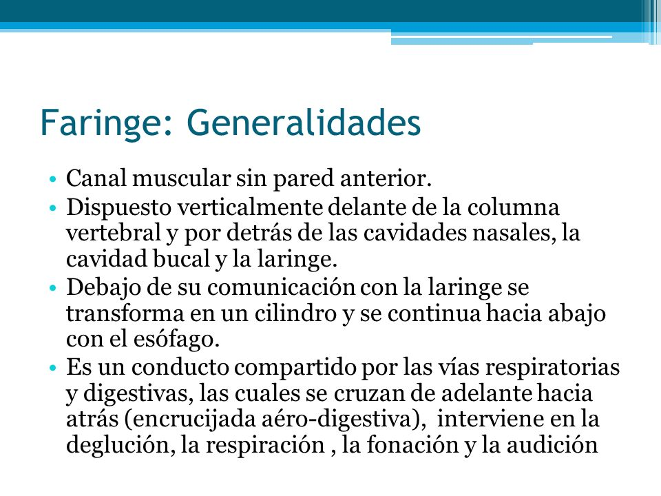 Faringe: Generalidades