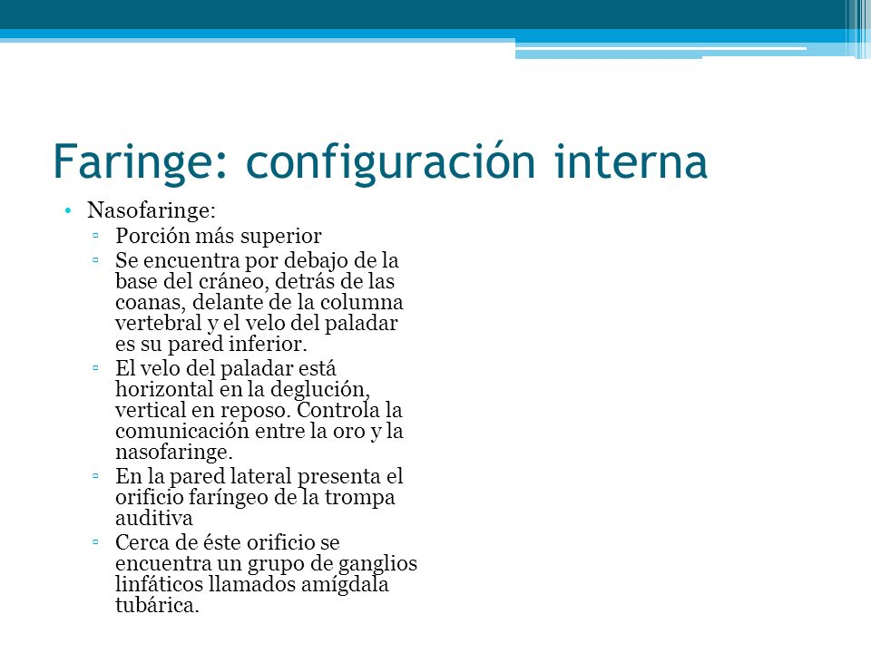 Faringe: configuración interna