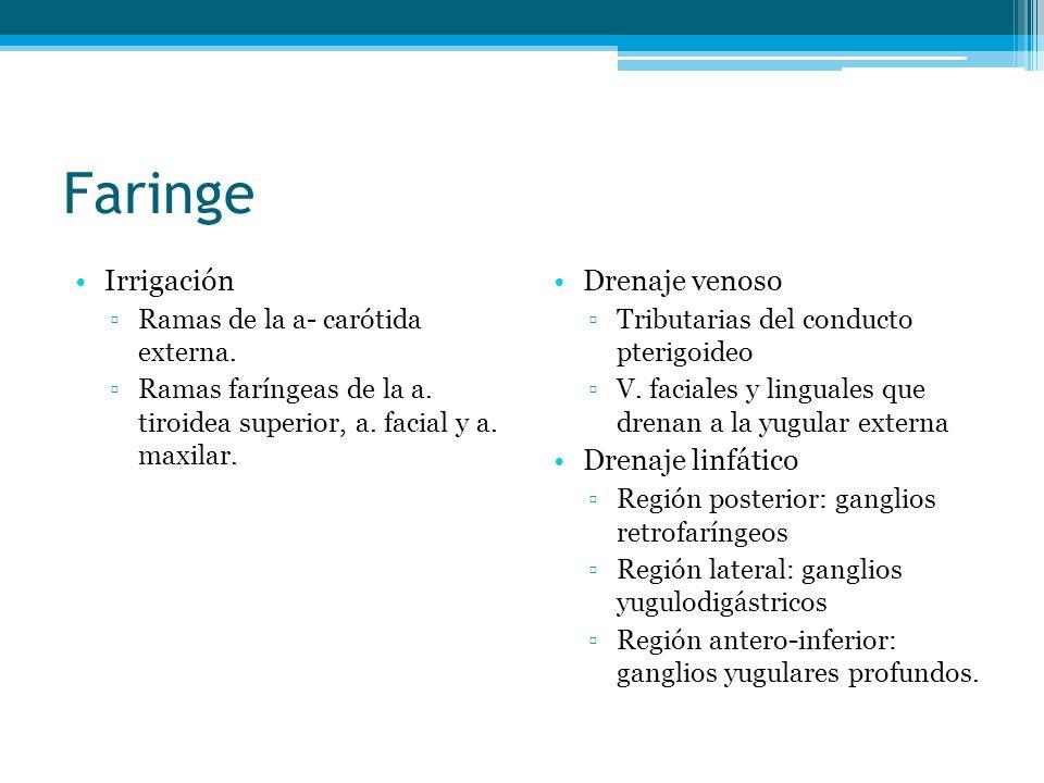 Faringe Irrigación Drenaje venoso Drenaje linfático