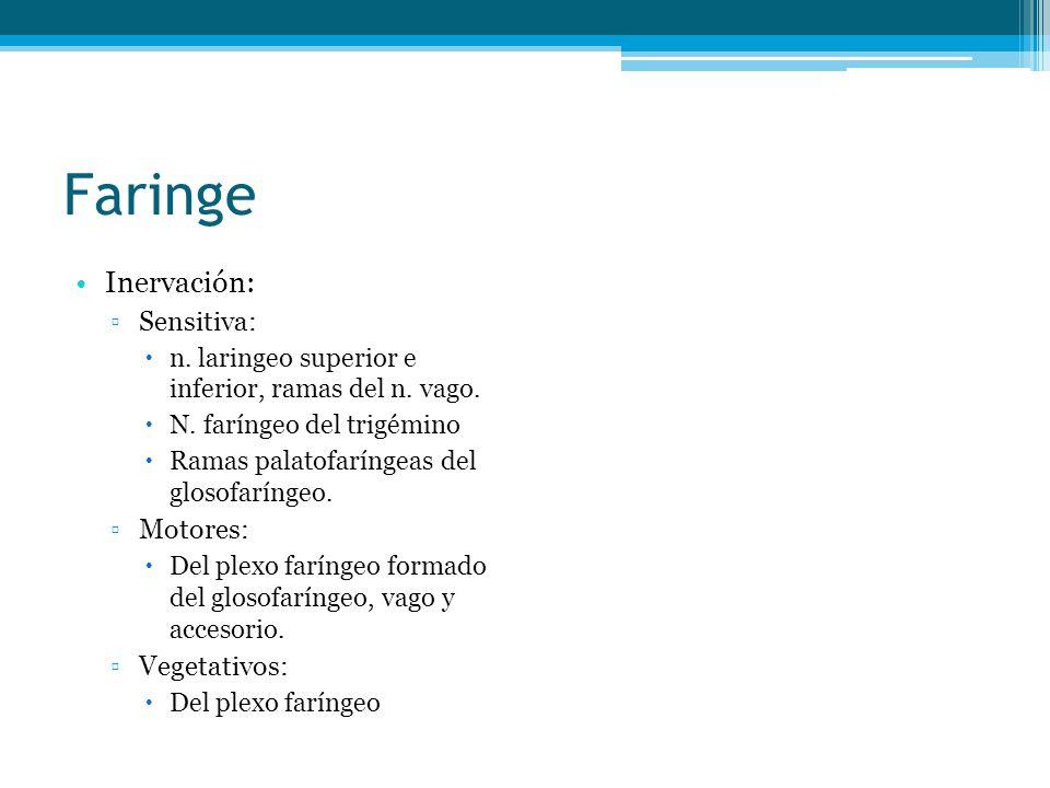 Faringe Inervación: Sensitiva: Motores: Vegetativos: