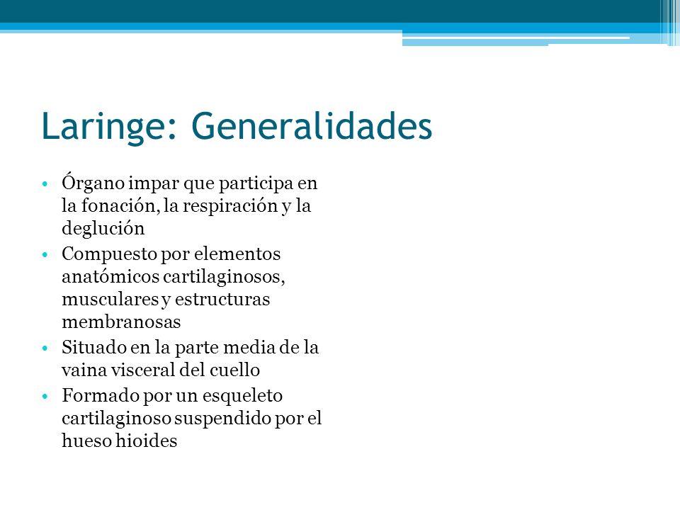 Laringe: Generalidades