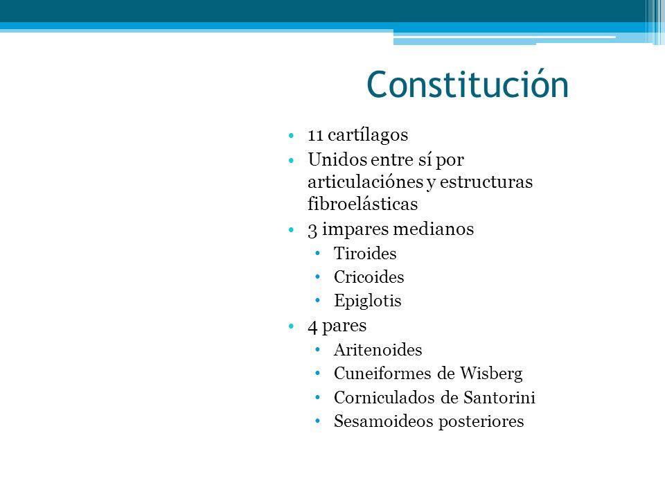 Constitución 11 cartílagos