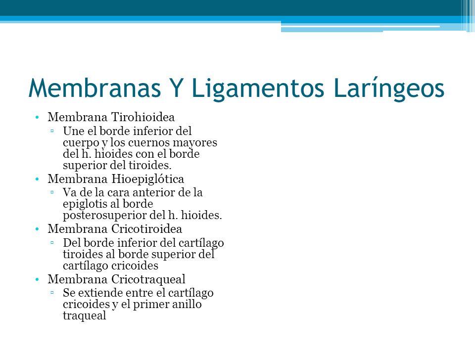 Membranas Y Ligamentos Laríngeos