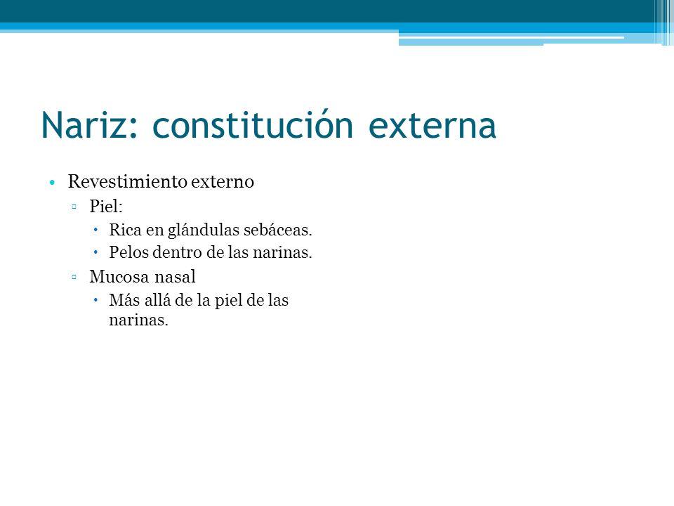 Nariz: constitución externa