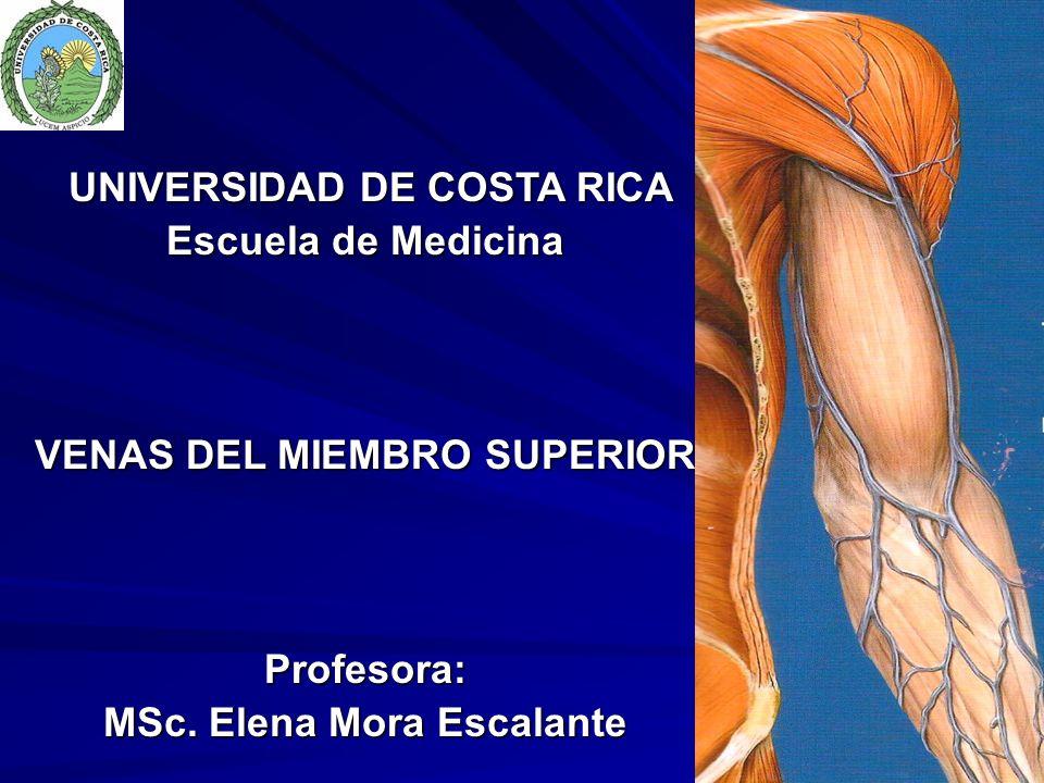 VENAS DEL MIEMBRO SUPERIOR MSc. Elena Mora Escalante