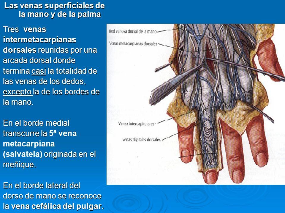Las venas superficiales de la mano y de la palma