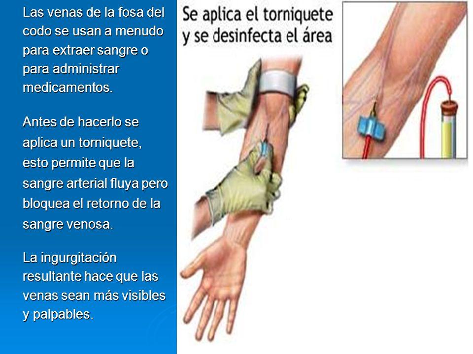 Las venas de la fosa del codo se usan a menudo para extraer sangre o para administrar medicamentos.