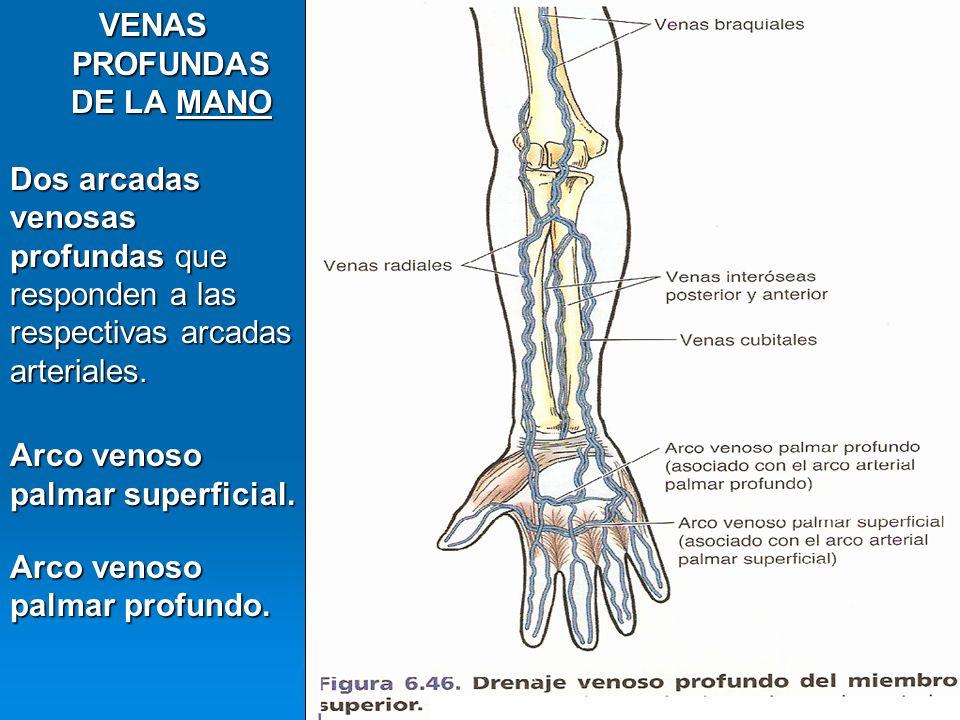 Contemporáneo La Mano La Anatomía Venosa Ilustración - Anatomía de ...