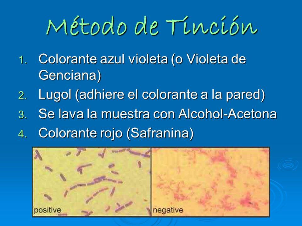 Método de Tinción Colorante azul violeta (o Violeta de Genciana)