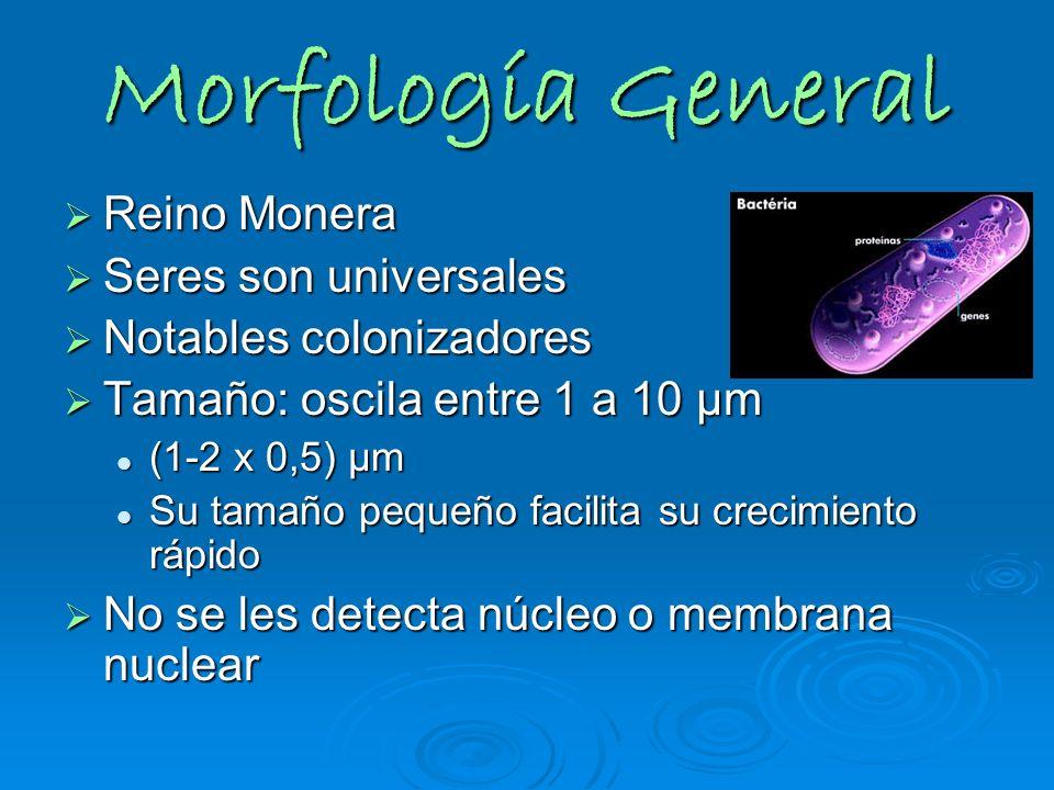 Morfología General Reino Monera Seres son universales