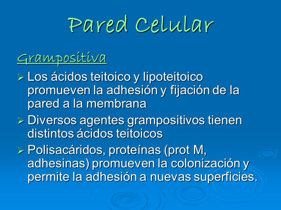 Pared Celular Grampositiva