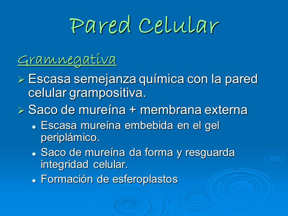 Pared Celular Gramnegativa