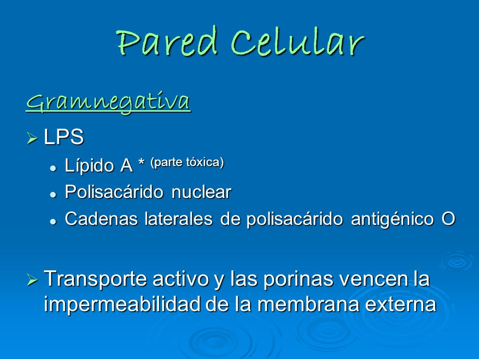 Pared Celular Gramnegativa LPS