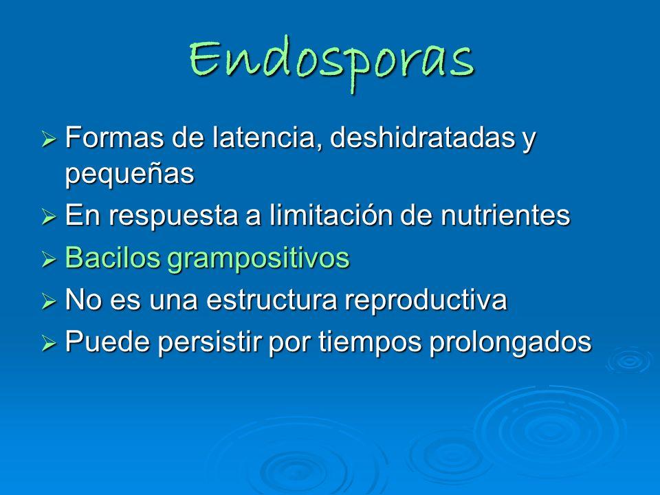Endosporas Formas de latencia, deshidratadas y pequeñas