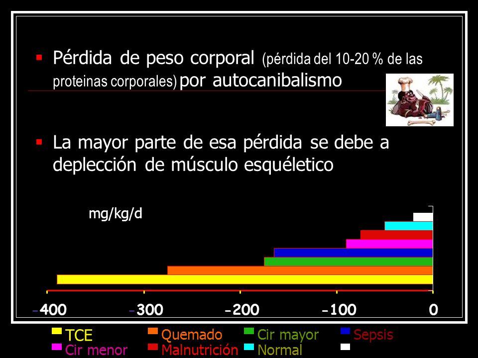 Pérdida de peso corporal (pérdida del 10-20 % de las proteinas corporales) por autocanibalismo