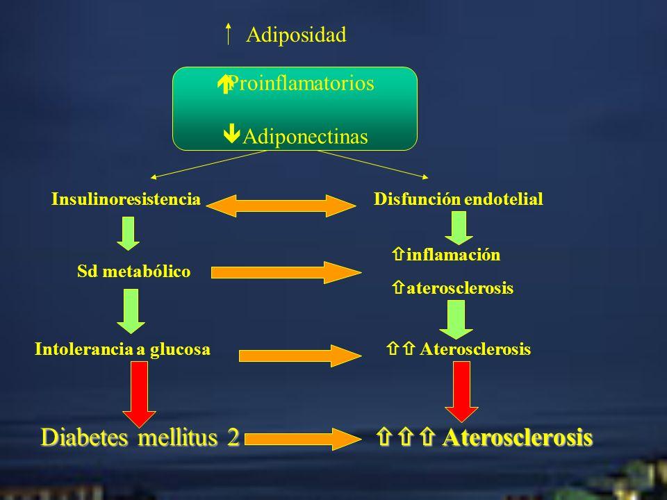 Diabetes mellitus 2  Aterosclerosis Adiposidad Proinflamatorios
